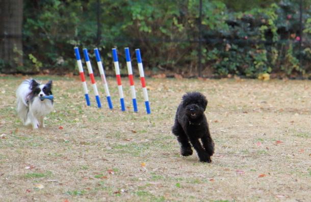 昭和記念公園 小型犬00033603