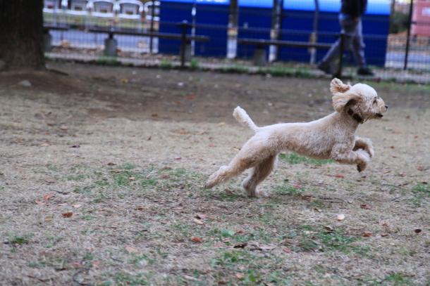 昭和記念公園 小型犬00033614
