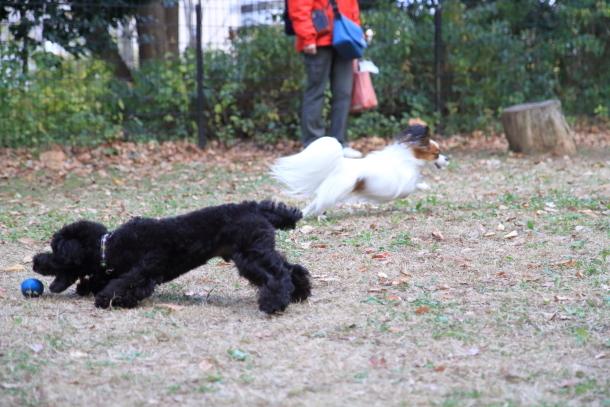 昭和記念公園 小型犬00033626