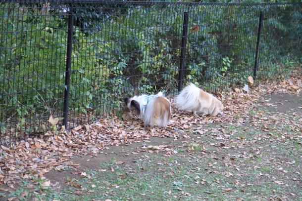昭和記念公園 小型犬00033610