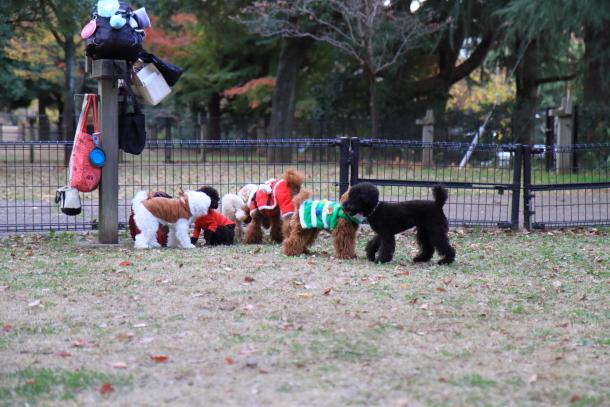昭和記念公園 小型犬00033620