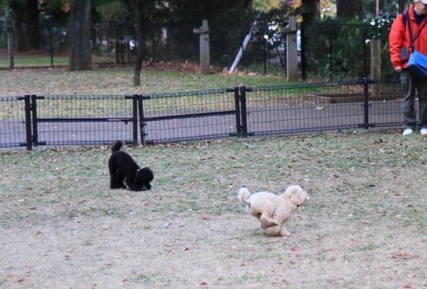 昭和記念公園 小型犬00033655