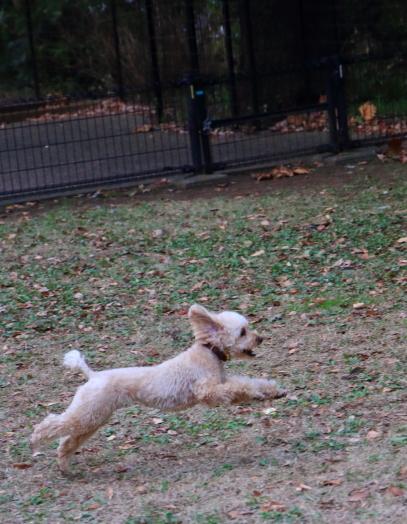 昭和記念公園 小型犬00033665