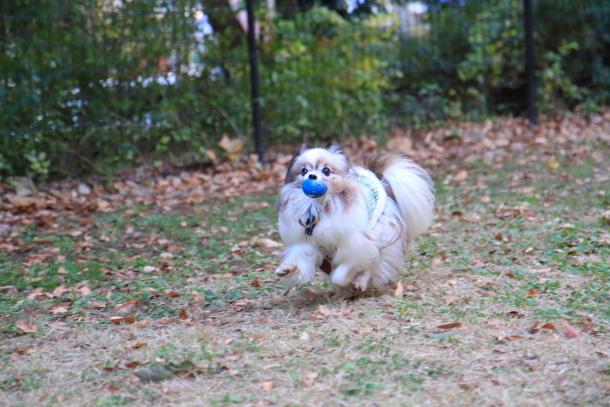 昭和記念公園 小型犬00033729