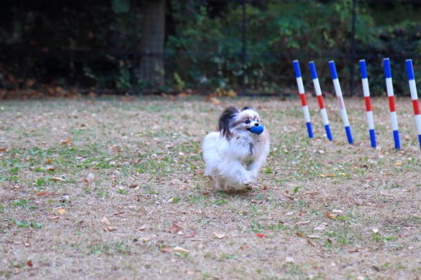 昭和記念公園 小型犬00033736