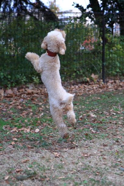 昭和記念公園 小型犬00033739
