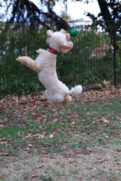 昭和記念公園 小型犬00033740