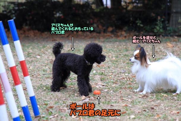 昭和記念公園 小型犬00033745