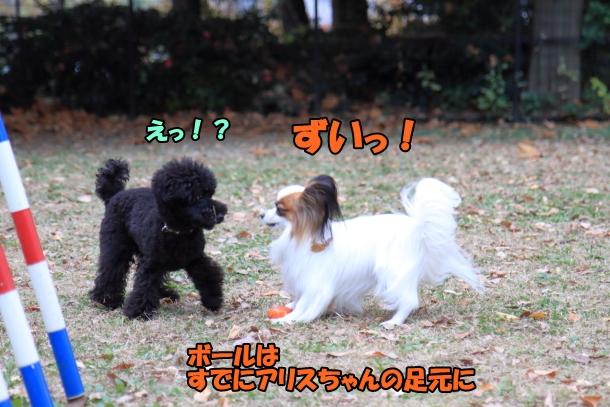 昭和記念公園 小型犬00033746