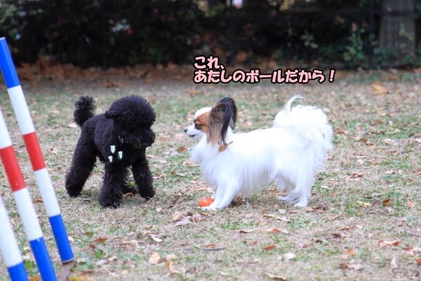 昭和記念公園 小型犬00033747