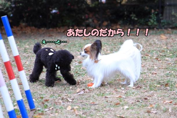 昭和記念公園 小型犬00033748