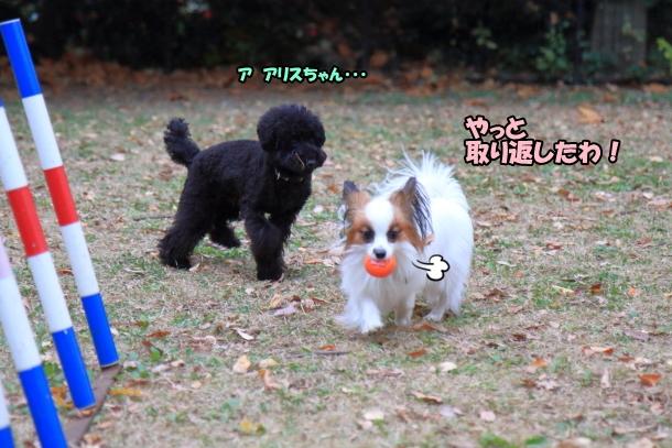 昭和記念公園 小型犬00033749