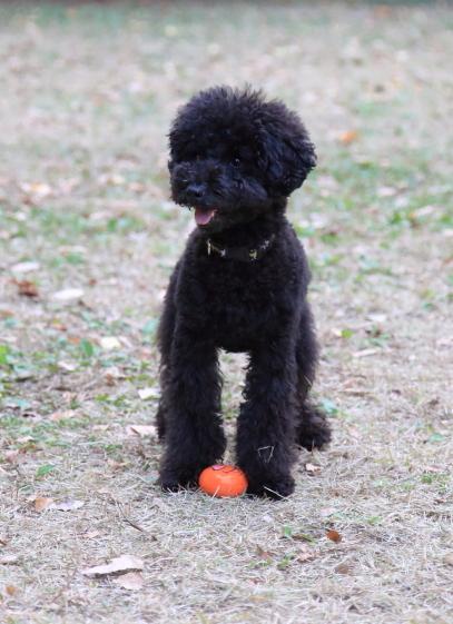 昭和記念公園 小型犬00033738