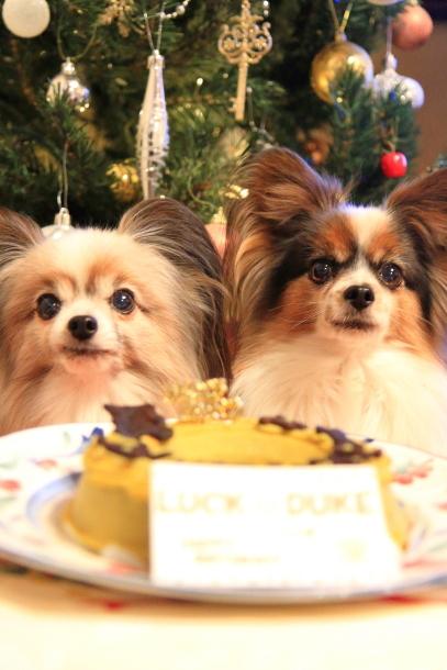 誕生日ケーキ201700034833