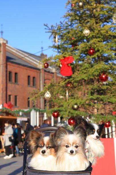 赤レンガ倉庫のクリスマス201700035351