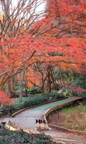 東高根森林公園 紅葉00036537