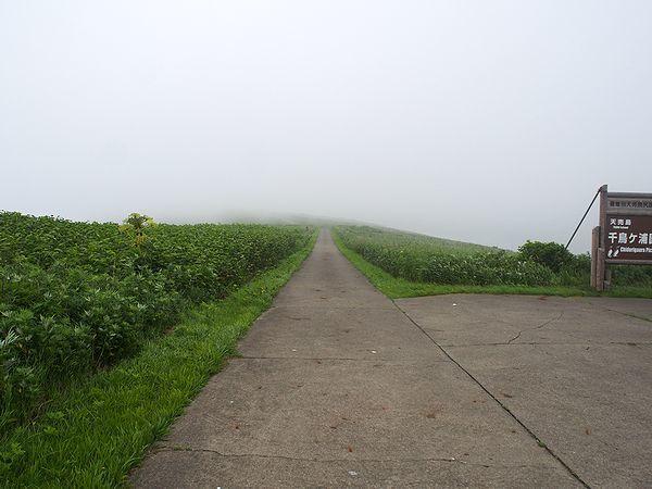 天売島北海岸は霧の中