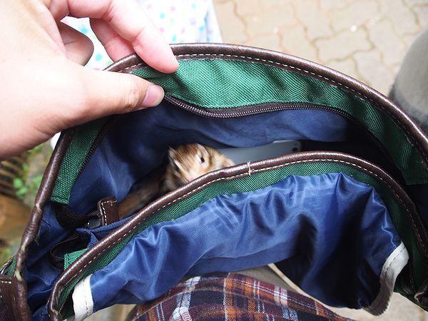 バッグの中に入っちゃったシマリス@加茂山リス園