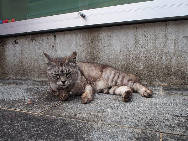崎津集落にいた猫