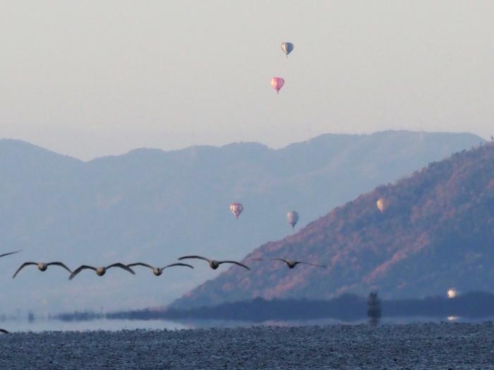 熱気球と鳥