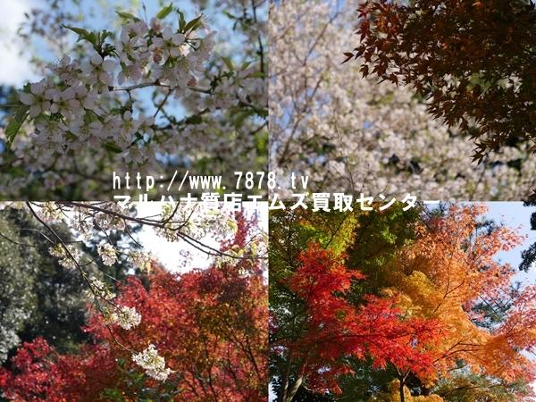 ヒマラヤ桜 マルハナ質店エムズ買取センター