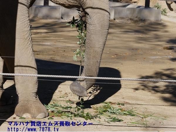 象の鼻 豊橋ブランド品買取マルハナ質店