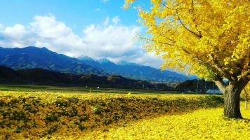 【 秋の名残と 迎える冬と 】②