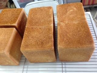 食パンたち