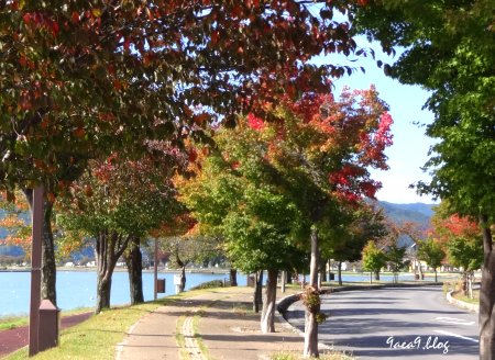 美しい信州諏訪湖の写真を再び 5