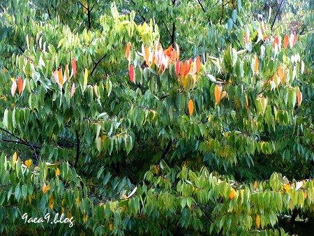 激しい雨を 雨がしたたり落ちる葉で表現してみた 1