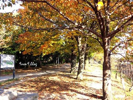 2017年11月10日 梅小路公園 5