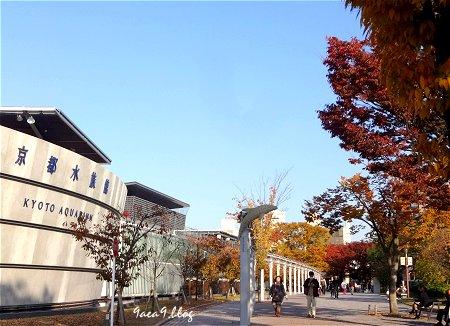 2017年11月10日 梅小路公園 京都水族館とか 花とか 4
