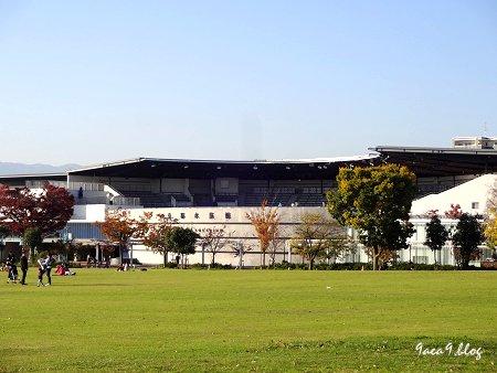 2017年11月10日 梅小路公園 京都水族館とか 花とか 5