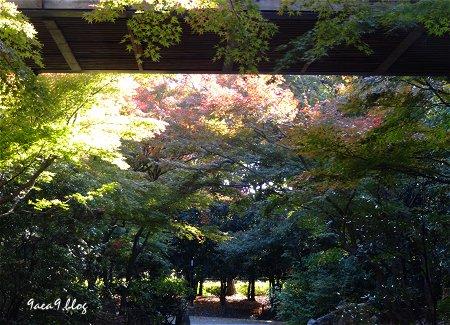 2017年11月10日 梅小路公園 京都水族館とか 花とか 11