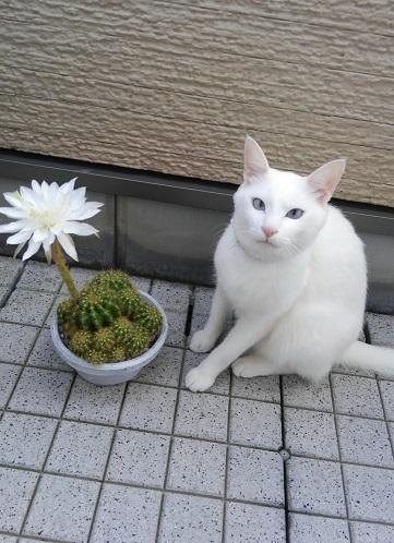 たま(すりーきじーずさん)