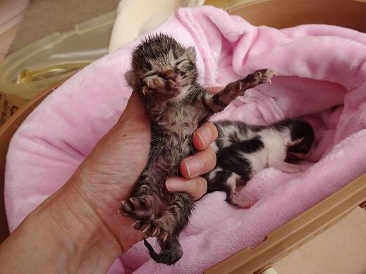 子猫マスカット5