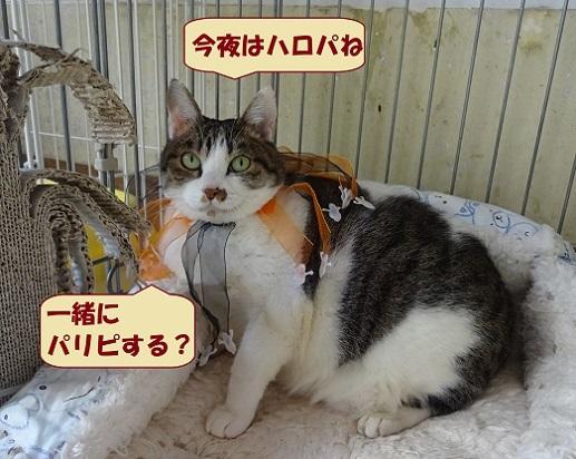 ヒスイちゃん1