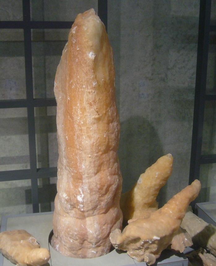 化石の一物