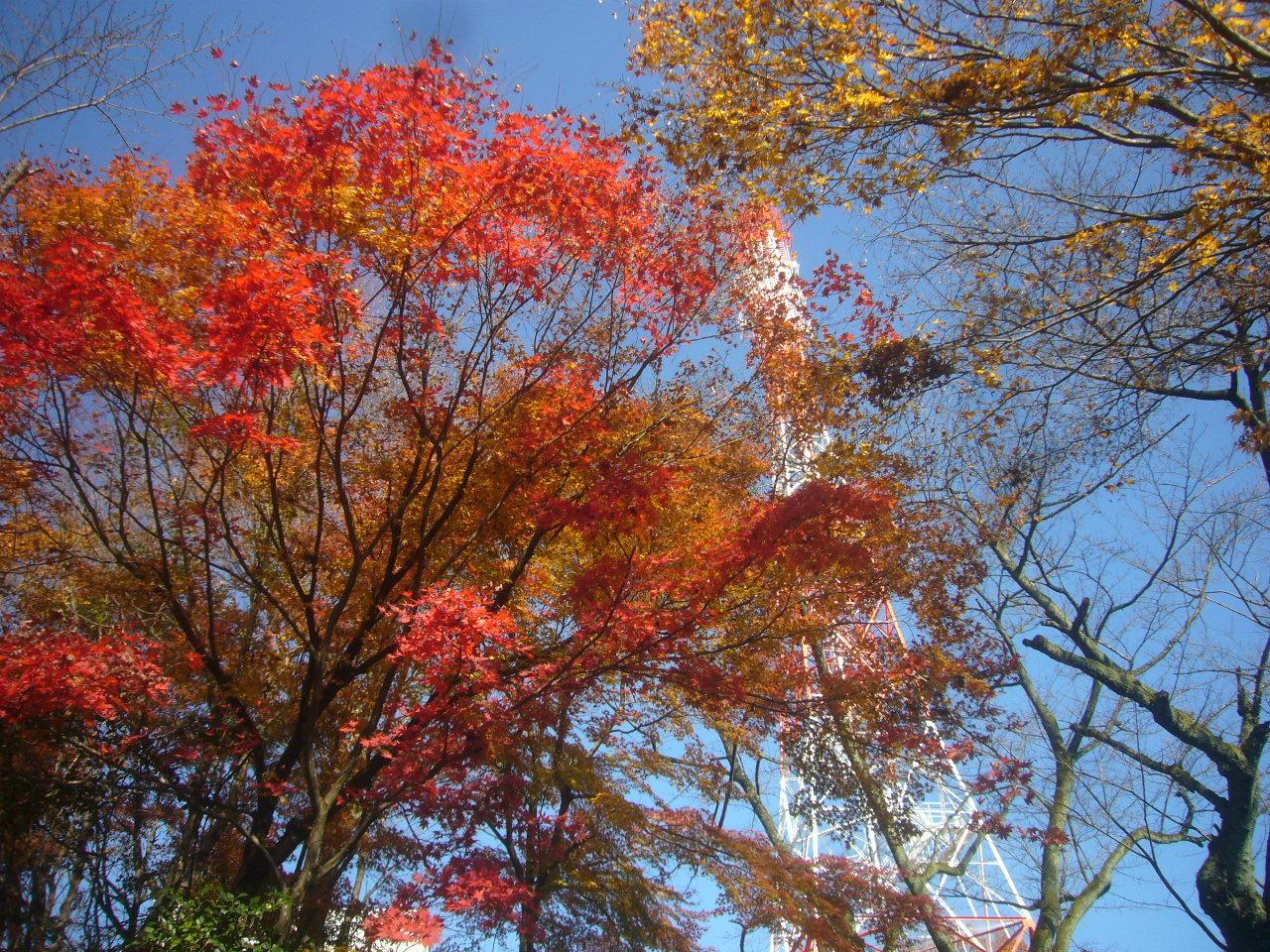 紅葉とタワー H29.11.27