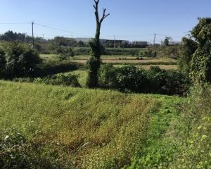 辺りの蕎麦畑の様子