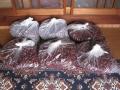 H29.11.10ピンク花ローゼルのがく出荷⑤(K社③、18k)@IMG_0991