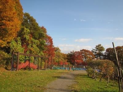 朝里川公園2