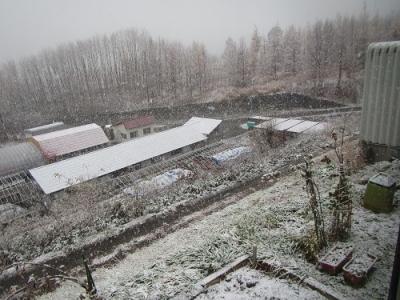 雪降りました!