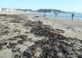 打ち上げられた海藻など