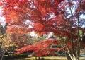 境内の紅葉