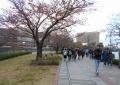 桜の紅葉②