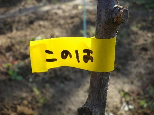 自然薯 2017 11 25-11