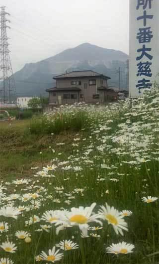 20170512_chichibu_003.jpg