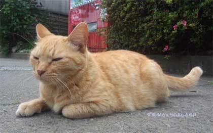 20170524_miyagase_cat_006.jpg