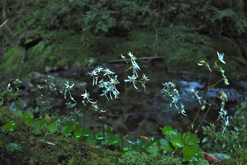 daimonzisou041.jpg